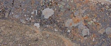 Szczegóły barwiony liszaj na powulkanicznym boulde, jaskrawy Obraz Stock
