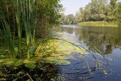 szczegóły brzegu rzeki Zdjęcia Royalty Free