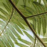 szczegóły paproci green Fotografia Stock