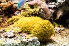 Szczegóły rafa koralowa Obrazy Royalty Free