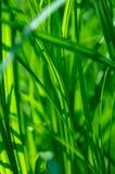 szczegóły trawa zieleni Obraz Royalty Free