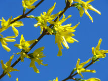 szczegóły wiosna Obrazy Royalty Free