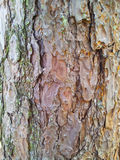 Szczegół barkentyna drzewo Obrazy Stock