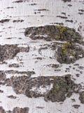Szczeg?? barkentyna ?lobi? czasem, ro?lina stary park Tekstury i narysy na barkentynie powodowa? czasem zdjęcie stock