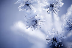 Szczegół zamarznięty kwiat Obrazy Stock