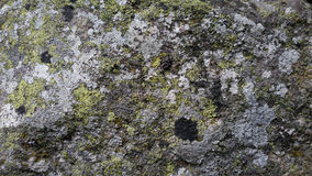 szczegółowe prawdziwe tło bardzo kamień Zdjęcia Royalty Free