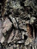 szczekać drzewo tropikalne Zdjęcie Royalty Free