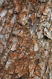 szczeka tekstury drzewa Fotografia Royalty Free