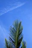 Szczeka w kho Tao Asia wyspie biały Thailand i niebie Obraz Stock