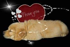 szczeni się valentine Zdjęcie Royalty Free