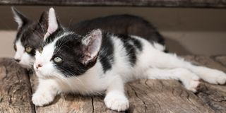 Szczeniaków czarny i biały koty fotografia royalty free