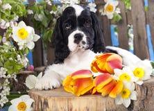 Szczeniaków kwiaty i spaniel Fotografia Royalty Free
