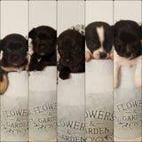 5 szczeniaków w flowerpot Obraz Stock