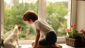 Szczeniak bawić się kąski dziecko na okno zdjęcie wideo
