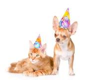 Szczeniak i figlarka w urodzinowych kapeluszach pojedynczy białe tło Obrazy Stock