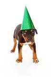Szczeniak jest ubranym partia zielona kapelusz Obrazy Royalty Free