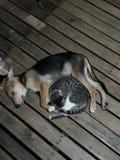 Szczeniak, kota sen i cuddling i obrazy stock