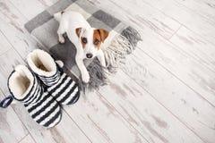 Szczeniak na dywaniku Obraz Stock