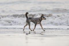 Szczeniak na plaży Fotografia Stock