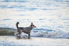 Szczeniak na plaży Zdjęcie Stock