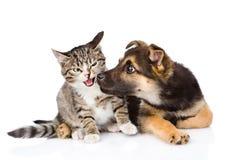 Szczeniak obwąchuje kota pojedynczy białe tło Obrazy Royalty Free