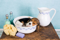 Szczeniak w washtub Fotografia Royalty Free