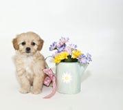 szczeniak wiosna Obraz Royalty Free