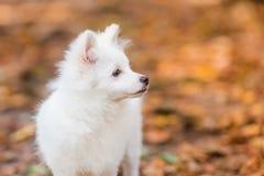szczeniaka śliczny biel Zdjęcia Stock