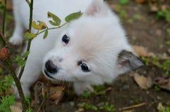 szczeniaka mały biel Obrazy Stock