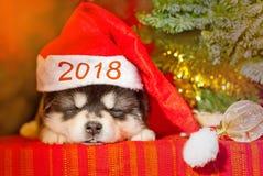 Szczeniaka obsiadanie na czerwonym tle w Święty Mikołaj kapeluszu Fotografia Stock