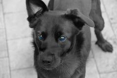 Szczeniaka pies fotografia stock