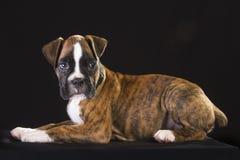 Szczeniaka pies Obrazy Stock