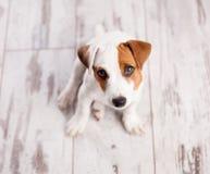 Szczeniaka pies obraz royalty free