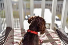 Szczeniaka pies bawić się w dół i relaksujący kłaść Fotografia Stock
