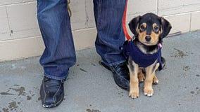 Szczeniaka pies na chodniczku Zdjęcia Royalty Free