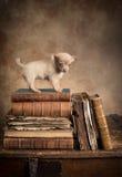 Szczeniaka pies na rocznik książkach zdjęcia stock