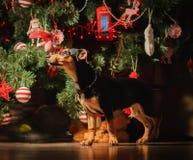 Szczeniaka pies pod nowego roku drzewem dekorował dla wakacje zdjęcia stock