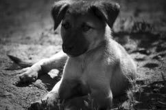 Szczeniaka psa †‹â€ ‹kłama na ziemi czarny i biały zdjęcia stock