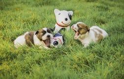 Szczeniaka psa poziewanie Zdjęcie Royalty Free