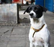 Szczery pies Zdjęcia Stock