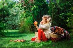 Szczęśliwa dziecko dziewczyna zbiera jabłka w jesień ogródzie Sezonowa plenerowa wiejska aktywność Zdjęcie Royalty Free