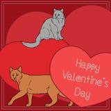 Szczęśliwy walentynki ` s dzień - koty inkasowi Zdjęcia Stock