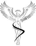 szczotkarska chiropractic ikony linia ilustracja wektor