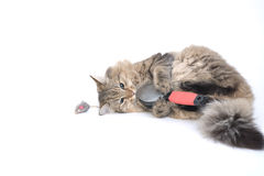 szczotkarski kitting grać Obraz Stock