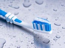 szczotkarski ząb Fotografia Royalty Free