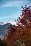 Szczupaki Osiągają szczyt jesień Fotografia Royalty Free