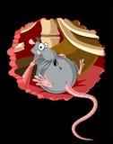 szczur. Obrazy Royalty Free