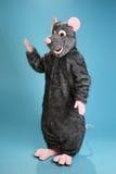 szczur Zdjęcia Royalty Free