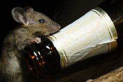 SZCZUR butelka i Piwni alkoholiczni napoje, efekt zdrowotny, czarny tło odizolowywający Zdjęcia Stock