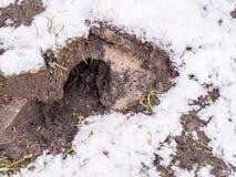 Szczur dziura Obrazy Royalty Free